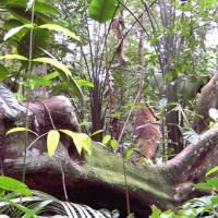 Bäume im Amazonas