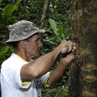 Geschichte Amapá