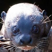 Säugetiere in Amazonien