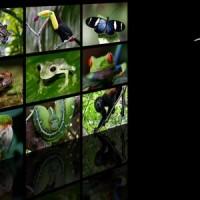 Biodiversifikation Amazoniens