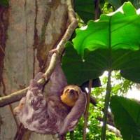 Tiere in Amazonien