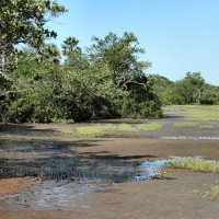 Trockenheisses Wüstenklima im Amazonas beunruhigt Meteorologen
