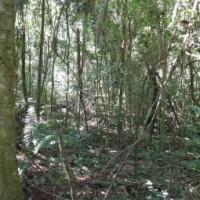 Geplante Änderungen am Waldgesetz in der Kritik