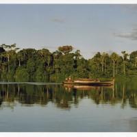 Regenwald am Fuße der Anden