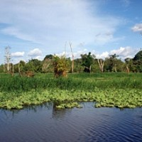 Amazônia Nationalpark