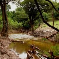 Jaú Nationalpark