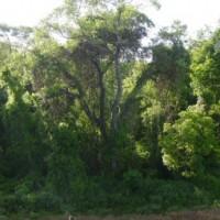 Brasilien: Senat befürwortet neues Waldgesetz
