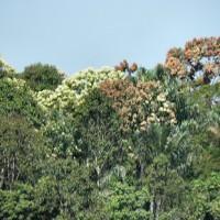 Mundurucu-Indianer verkaufen Rechte an Regenwald für Millionensumme