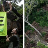 """Greenpeace: """"Illegaler Holzeinschlag ist ein chronisches Problem Brasiliens!"""""""