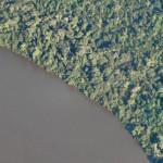 Abholzung im Amazonasgebiet Brasiliens weiter rückläufig
