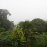 Regenwald wichtig für planetares Klima