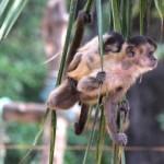 Tierart – Boom in Amazonien