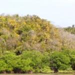 50.000 Pflanzenarten in Amazonien