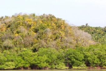 amazonas-wald