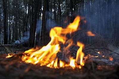 amazonien brennt1