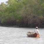 Amazoniens Rekord an Fischarten