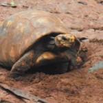 Schildkröten als Spielzeug