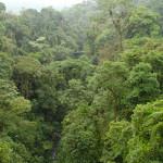 Bäume Amazoniens können einer Erwärmung der Erde widerstehen