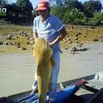 Gurijuba – Fisch mit Schwimmblase
