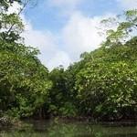 Parque Nacional do Jáu – Hort der Artenvielfalt