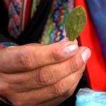 Drogenanbau in Kolumbien beeinflusst Weltklima