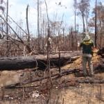 Holz-Mafia wütet weiter in Brasiliens Schutzgebieten