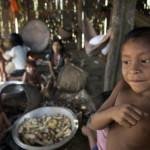 Straßenbau: Indios befürchten weitere Regenwald-Zerstörung