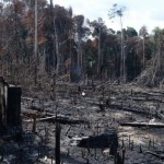 Kontrolle des Amazonas-Regenwaldes mit Hilfe von Satelliten und Indios