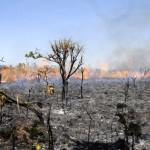 Abholzung im Amazonasgebiet scheint abzunehmen