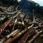 Auch selektive Baumentnahme kann hohe Mengen Kohlendioxid freisetzen