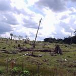 Abholzung im Amazonas-Regenwald nimmt 2014 wieder leicht zu