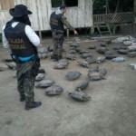 Polizei nimmt illegalen Händlerring von bedrohten Schildkröten hoch