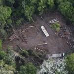 Europa fördert laut Greenpeace die Abholzung des Amazonas-Regenwaldes