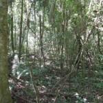 Amazonas-Regenwald wird immer mehr von Lianen eingenommen