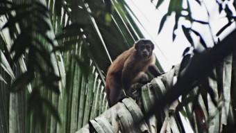 RTEmagicC_primatas_icmbio.jpg