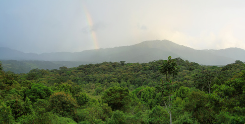 Landscape of ecuadorian cloudforest