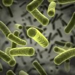 Artenreiche Bakterienwelt der Yanomamis gegen Antibiotika resistent