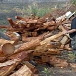 Neue Einrichtung soll Amazonas-Regenwald besser gegen Abholzung schützen