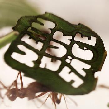 350-Ameisendemo-c-WWF_Lars Filthaut  WWF