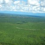 Peru: Amazonas-Regenwald weicht Kakao- und Palmölplantagen