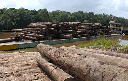 Manaus- AM- Brasil- 22/03/2015- O desmatamento da Amazônia foi de 42 quilômetros quadrados em fevereiro de 2015, um aumento de 282% em relação ao mesmo mês do ano anterior, quando foram devastados 11 quilômetros quadrados. Os números são do SAD (