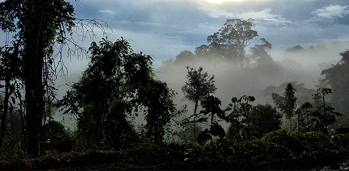 Dia da Amazonia_ Luciana Macedo