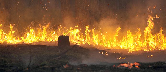 Regenwald-Feuer5_AgenciaBrasil