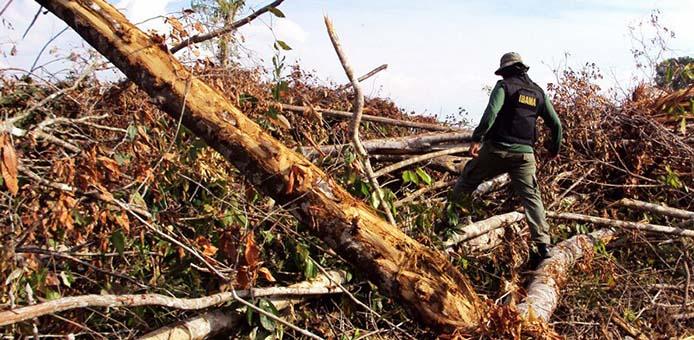 Abholzung_ Hebert Rondon Ibama