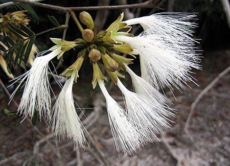 Flora Amazonien