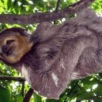 Amazonas-Regenwald: Peru weist 1,3 Millionen Hektar großen Natioalpark aus
