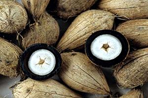 murumuru-amazonista-com-br
