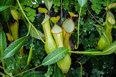 RJ Jardim Botanico Fleischfressende Pflanzen_9177