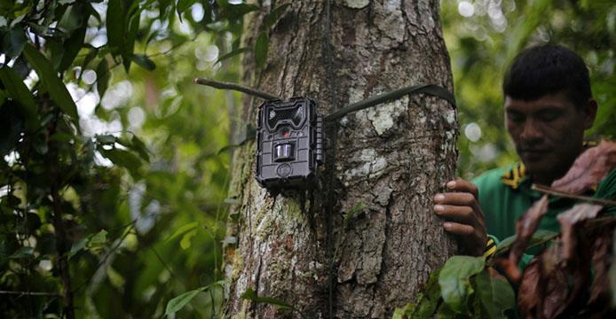 Kaapor installieren Kamera gegen Abholzung_Lunae Parracho-Greenpeace