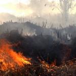 Dürre und Brände kennzeichnen Amazonas-Regenwald in Roraima